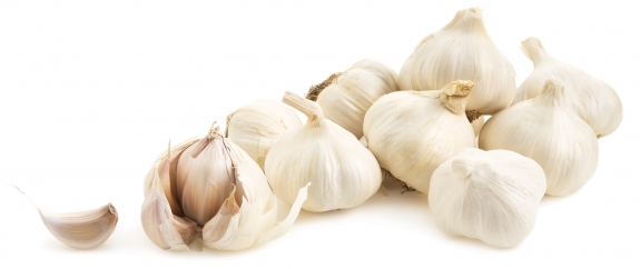 Egyptian Garlic for Export